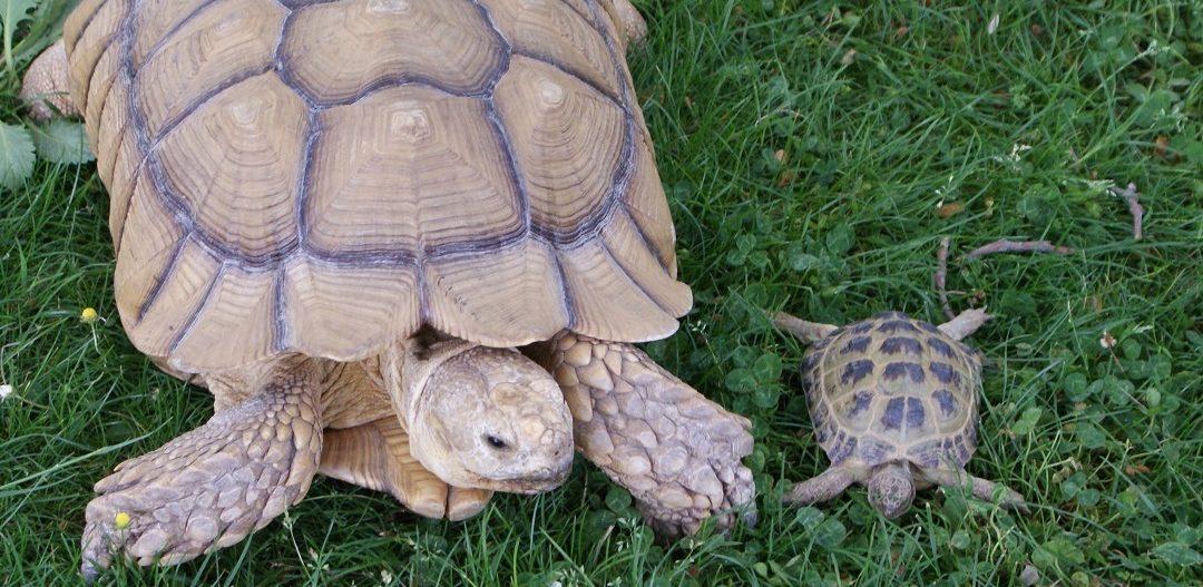 Nuestra tortuga gigante